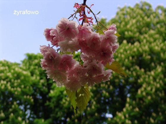 wiosna 2011_92