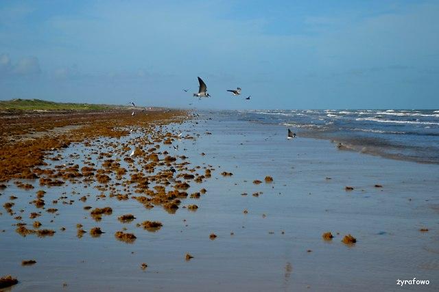 Padre Island 2014_18