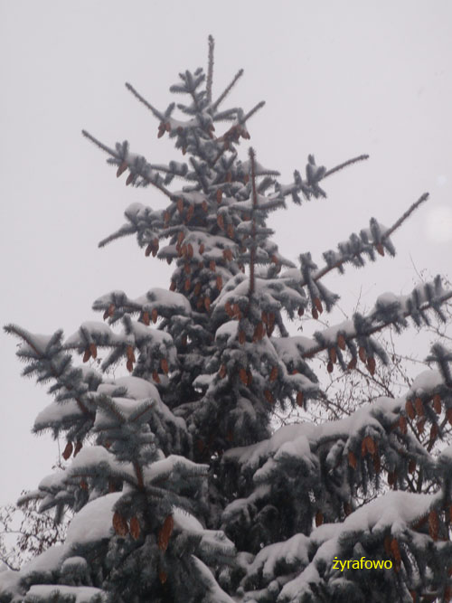 zima 2010_26