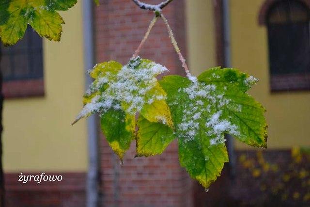 jesien 2012_145