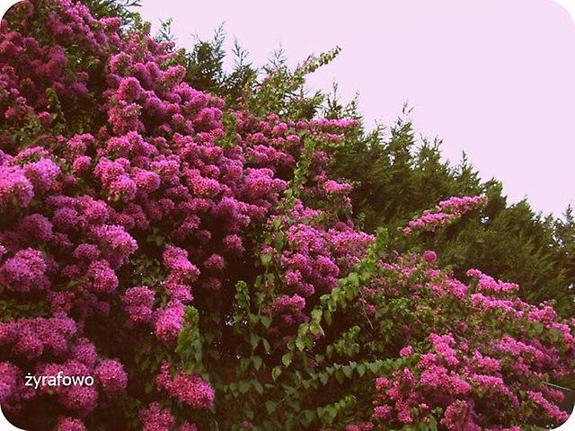 kwiaty_14
