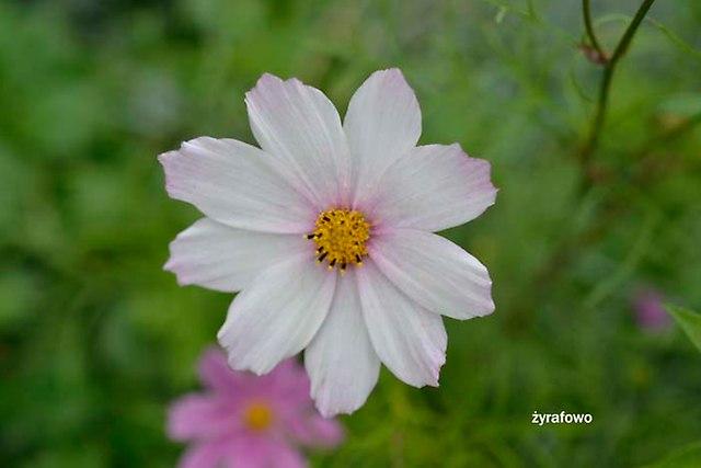 kwiaty 2012_02