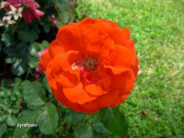kwiaty_20