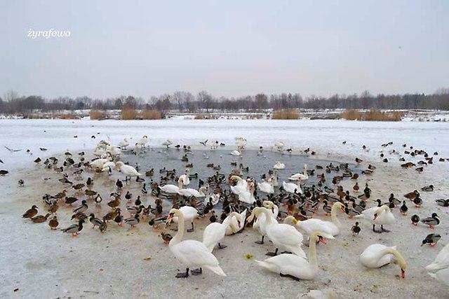 zima 2013_04