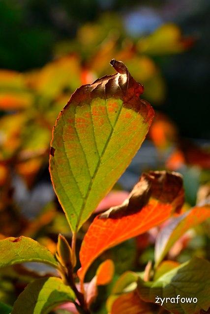 Ogrod Botaniczny 2014_01