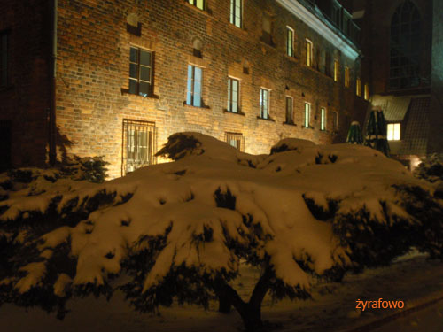 zima 2010_15
