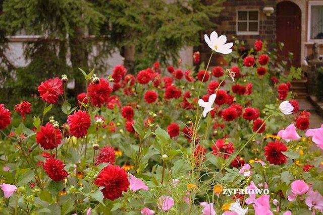 kwiaty 2012_29