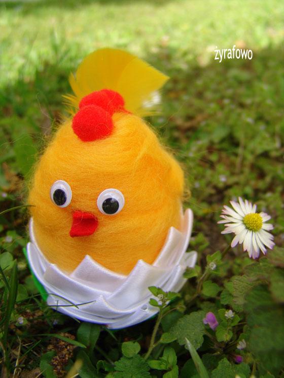kurczak 2011_14