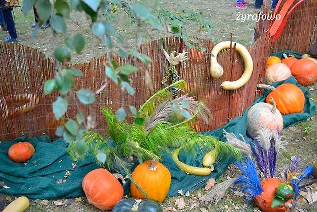 Festiwal Dyni 2012_71