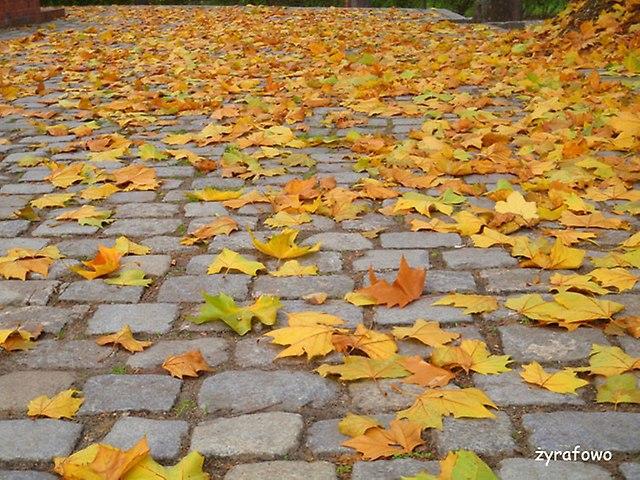 jesien 2014_35