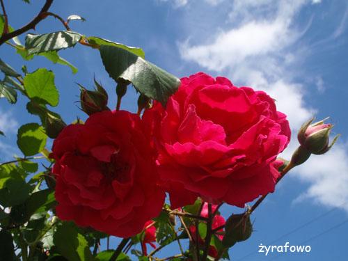 kwiaty_44
