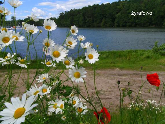 Mazury 2011.06_20