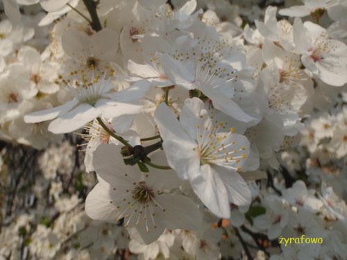 wiosna 2010_13
