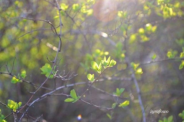 wiosna 2013_32