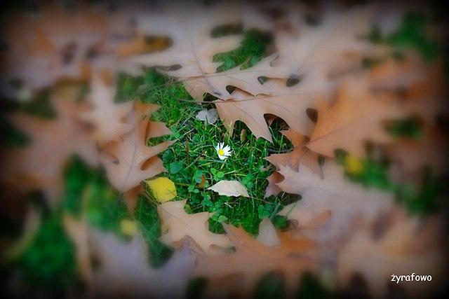 jesien 2015_25