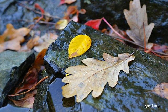 jesien 2014_41