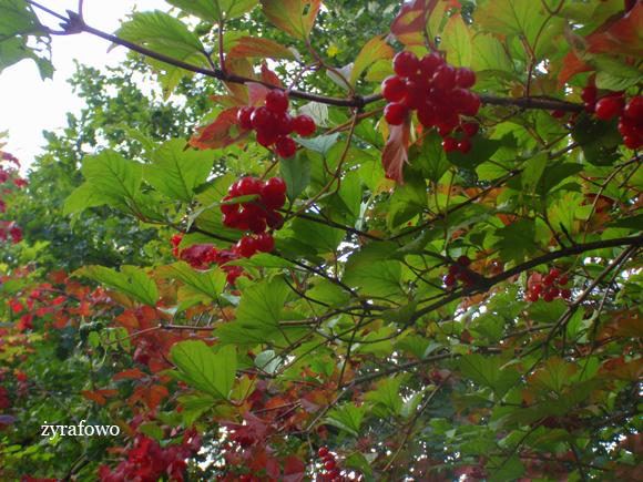 jesien 2011_60