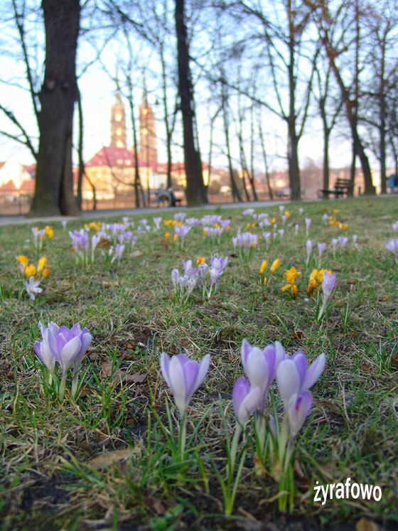wiosna 2011_02