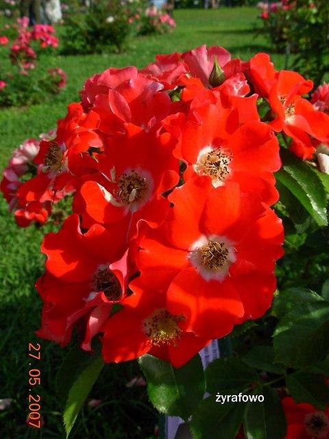 kwiaty_55