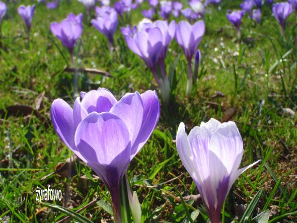 wiosna 2012_05