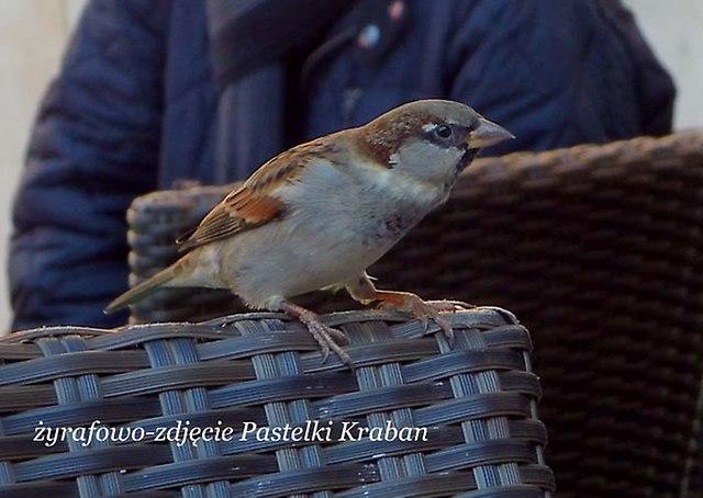 ptaki_02