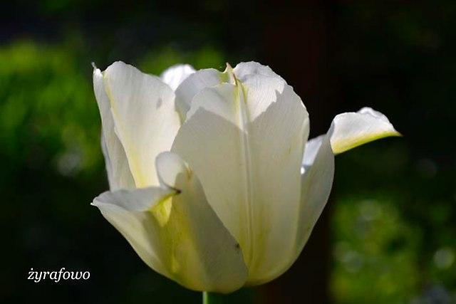 wiosna 2013_124