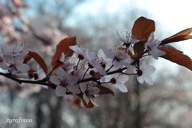 wiosna 2014_45