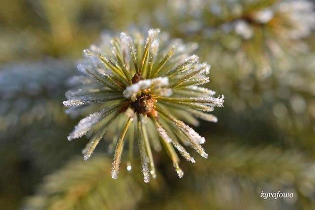 zima 2014_20