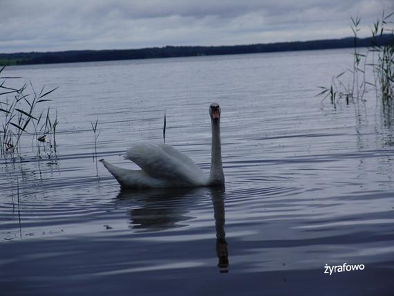Mazury 2011.07_13