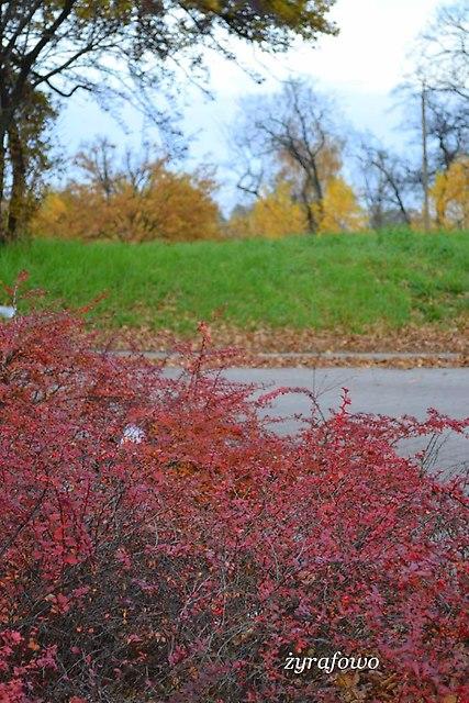 jesien 2012_248