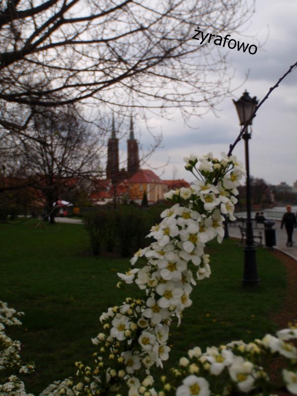 wiosna 2012_51