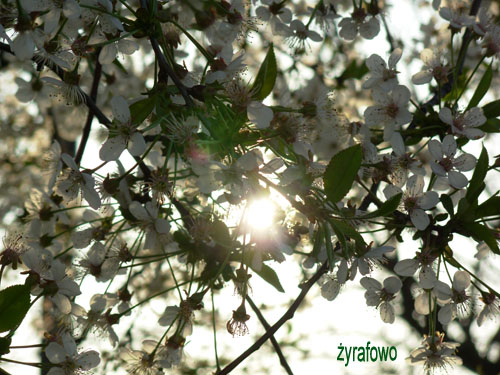 wiosna 2008 01