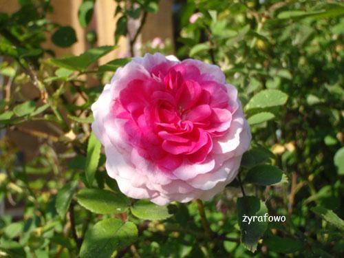 wiosna 2010_36
