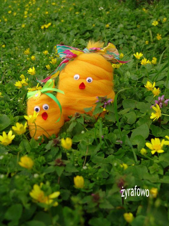 kurczak 2011_23