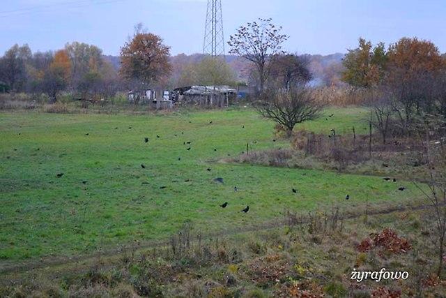 jesien 2012_231