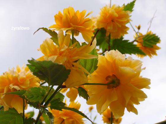 wiosna 2011_97