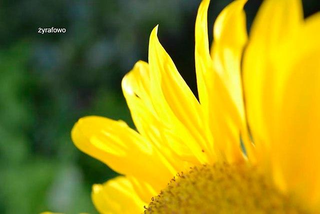 kwiaty 2012_25