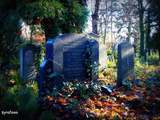 Cmentarz Zydowski_37