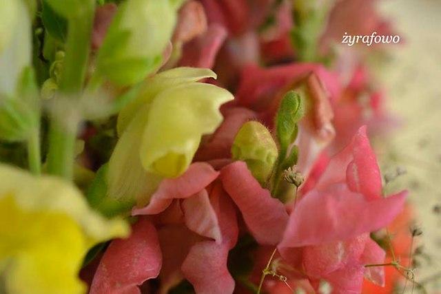 kwiaty_04
