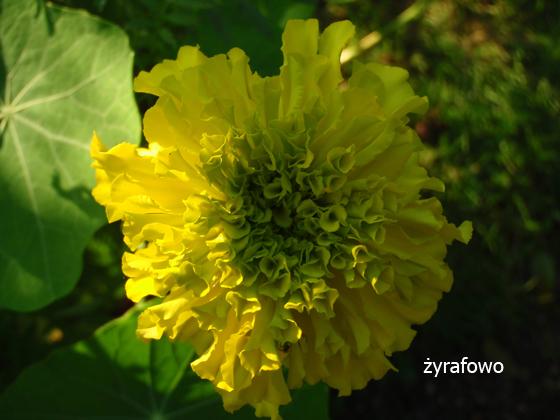 dzialka 2011_23