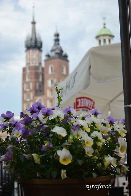 Krakow 2014_20