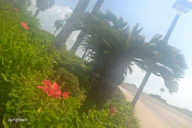 Corpus Christi 2014_36