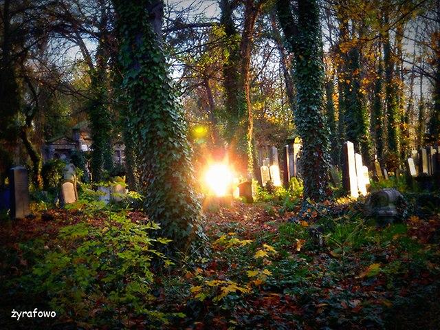 Cmentarz Zydowski_05