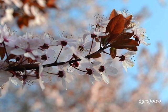 wiosna 2014_15