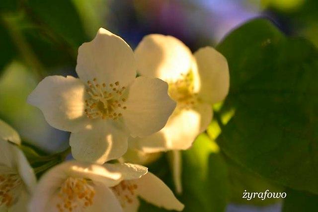 wiosna 2014_143