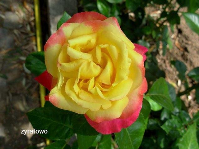kwiaty_09
