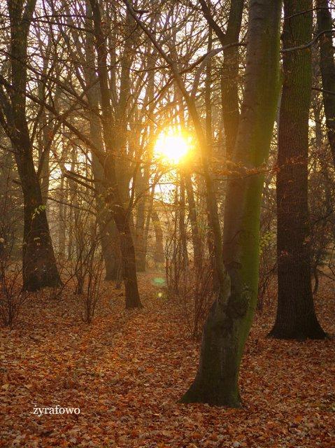 jesien 2011_52