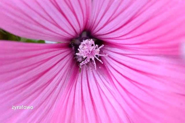 kwiaty 2012_23