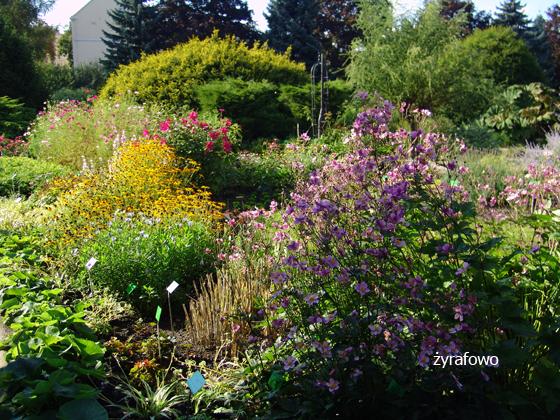 Ogrod Botaniczny 2011.08_05