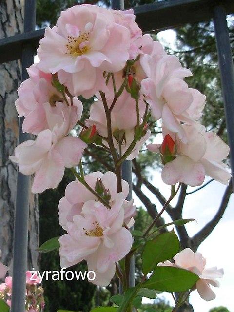 kwiaty_25